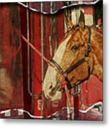 Clydesdale Ripped Metal Print