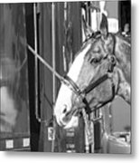 Clydesdale Shine Metal Print