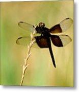 Coal Black Dragonfly Metal Print