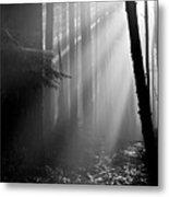 Coastal Forest 2 Metal Print