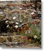 Coastal Wildflowers 1 Metal Print