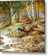 Cock Pheasant And Sulphur Tuft Fungi Metal Print by Carl Donner