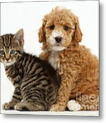 Cockapoo Puppy And Tabby Kitten Metal Print