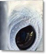 Cockatiel Eye Metal Print