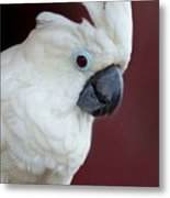 Cockatoo Portrait Metal Print