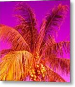 Cocnuts On Fire Metal Print