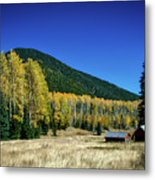 Coconino National Forest Metal Print