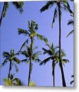 Coconut Grove At Wailua Metal Print