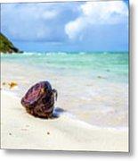 Coconut On The Beach Metal Print