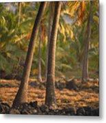 Coconut Palm Grove Metal Print