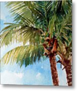 Coconut Palm Metal Print by Peter Sit