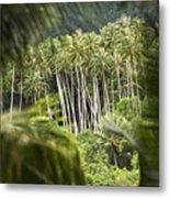 Coconut Palm Trees Metal Print