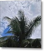 Coconut Tree Metal Print