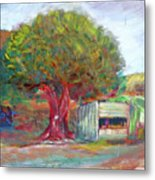 Coffee Tree Aauj Metal Print