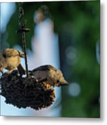Coffee With The Birds Metal Print