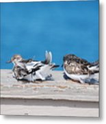 Cold Birds Metal Print