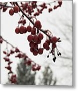 Cold Crabapples Metal Print