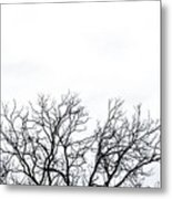 Cold Days Metal Print