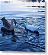 Cold Morning Swim 2 Metal Print