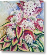 Coleus And Queen Anne Metal Print