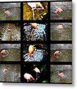 Birds' Collage-3 Metal Print