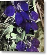 Collage By Mother Nature Metal Print
