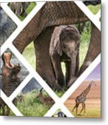 Collage Of Animals From Tanzania Metal Print
