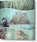 Collage Of Winter Grass Metal Print