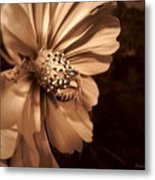 Collecting In Sepia Metal Print