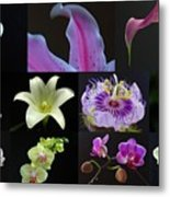 Collection Of Flowers Over Black  Metal Print