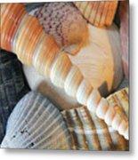 Collection Of Shells Metal Print