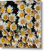 Collective Flowers Metal Print