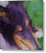 Collie Girl Siena Metal Print