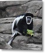 Colobus Monkey Metal Print