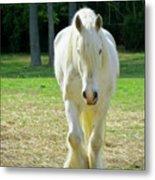 Colonial Horse In Williamsburg Metal Print