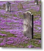 Colonial Tombstones Amidst Graveyard Phlox Metal Print by John Stephens