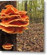 Color In The Woods Metal Print