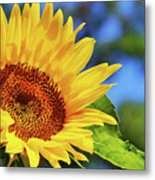 Color Me Happy Sunflower Metal Print