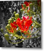 Color Me Red Metal Print