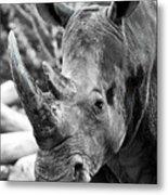 Color Me Rhino Metal Print