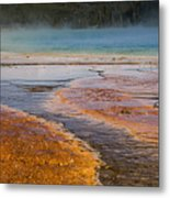 Color Of Life Metal Print