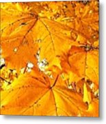 Color Of The Leaves Metal Print