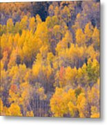 Colorado Autumn Trees Metal Print