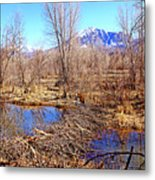 Colorado Beaver Ecosystem Metal Print