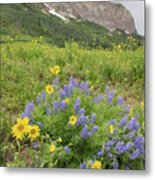 Colorado Color #4 Metal Print