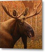 Colorado Moose Metal Print by James W Johnson