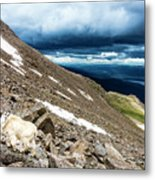 Colorado Mountain Goat Metal Print