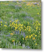 Colorado Summer Color Metal Print