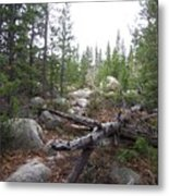 Colorado Trees Metal Print