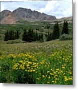 Colorado Wildflower Spectrum Metal Print